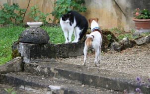 2782879637_666ca1ee10-chiens et chats