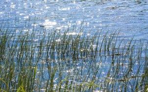 Les petits chevelus protecteurs de la ressource en eau