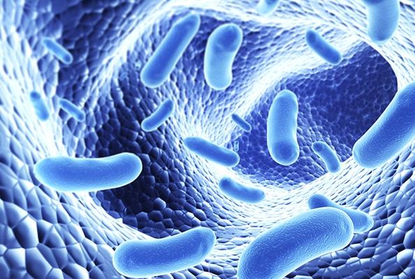 Bactéries microcospiques