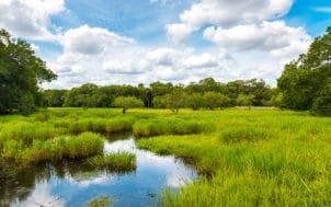 Les zones humides : des atouts face au changement climatique